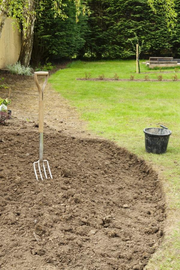 Catmint Soil