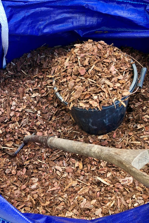 Gardenia Mulching 1