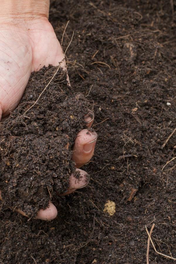 Gardenia Soil