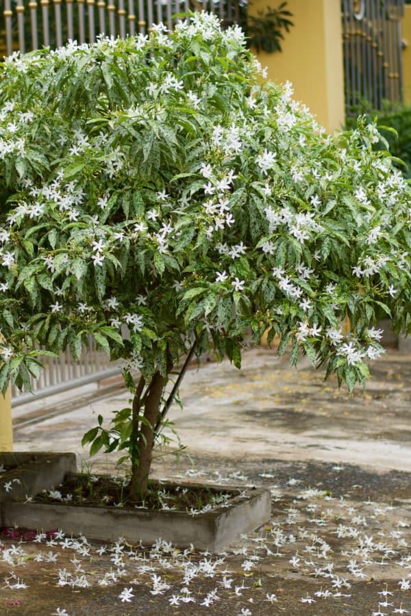 Gardenia Temperatures