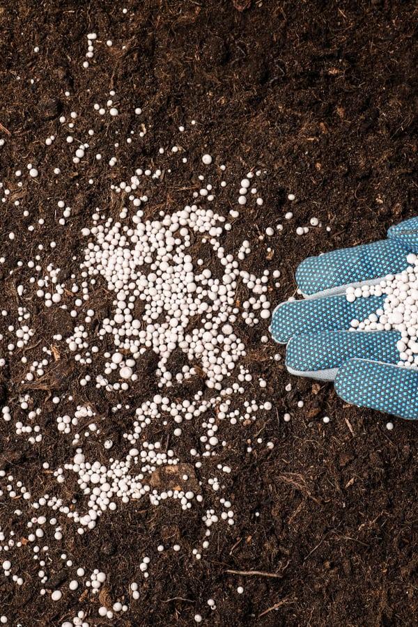 Glossy Abelia Fertilizing