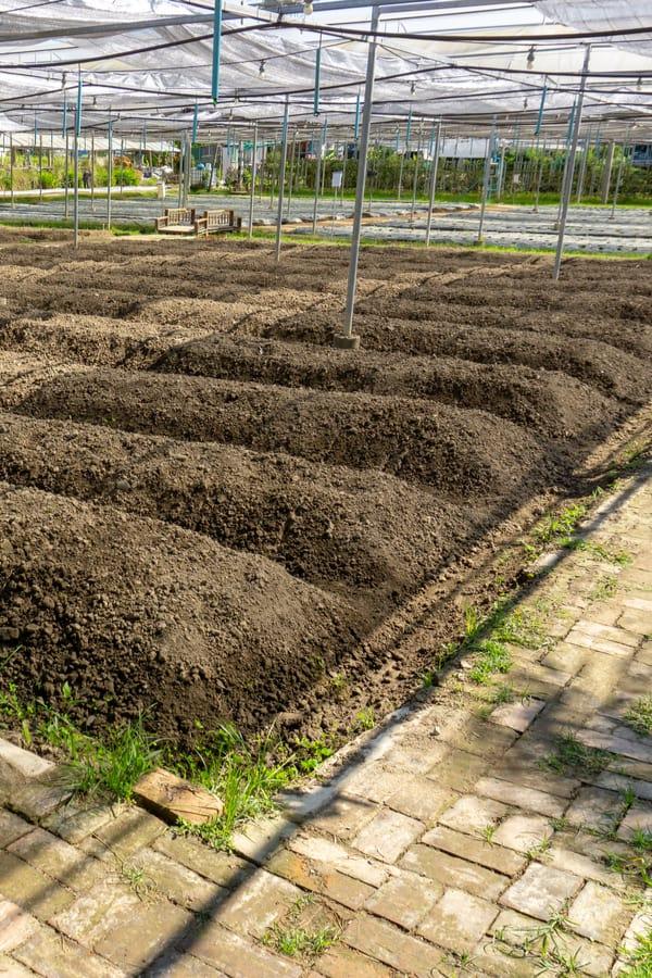 Iris Soil
