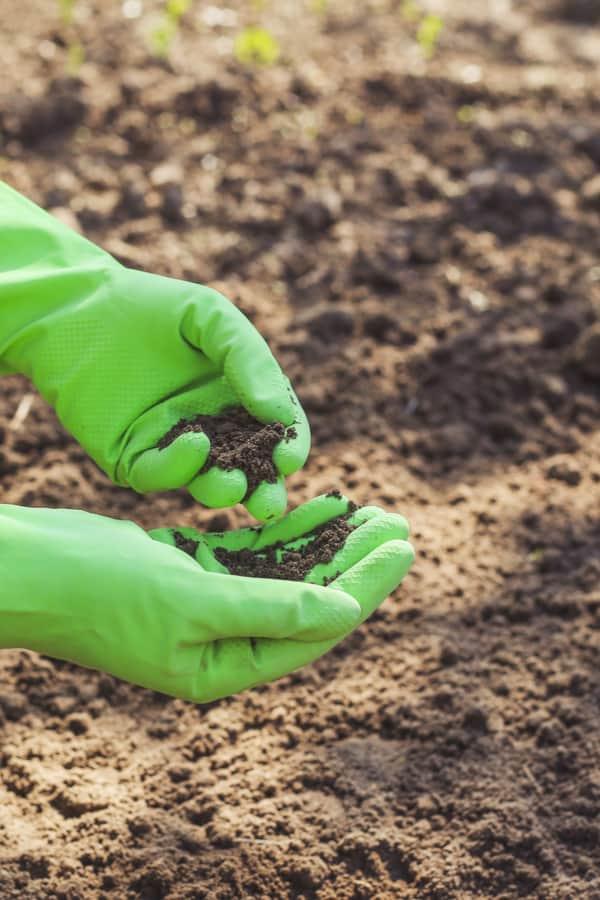 Lavender soil