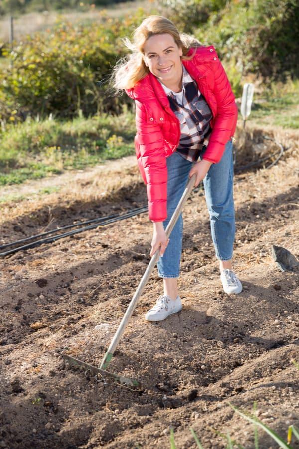 Nicotiana soil