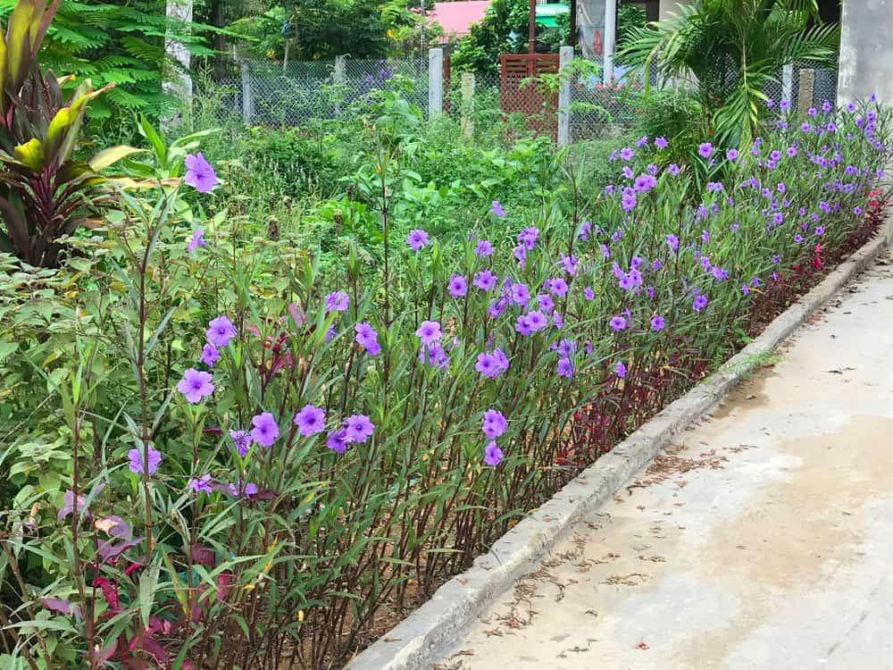 Non-invasive Varieties Suitable for Your Garden