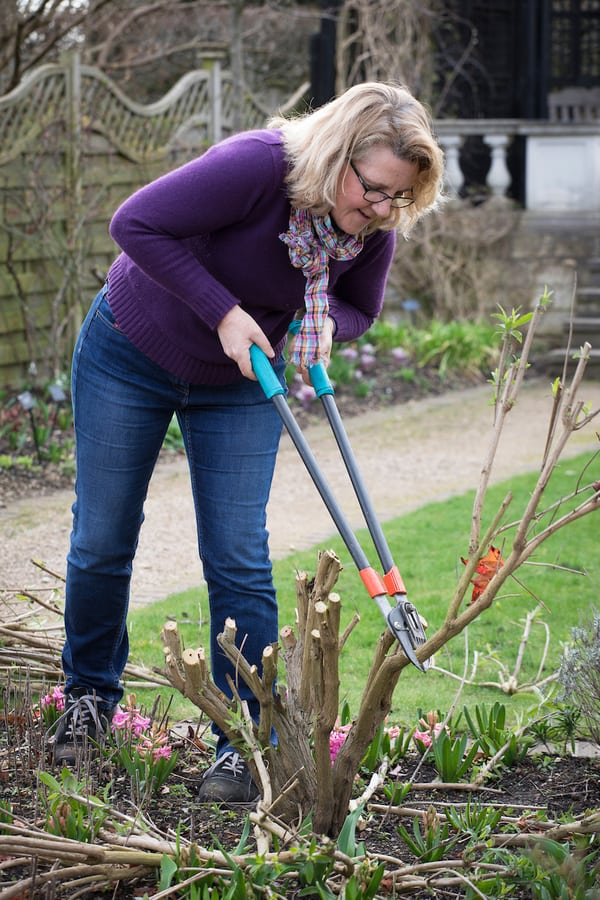 Pruning and deadheading