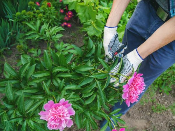 When to Prune Your Bushes/Shrubs? (Right Methods)