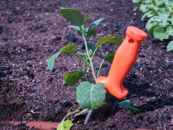 7 Best Hori Hori Knife of 2021 – Garden Knife Reviews