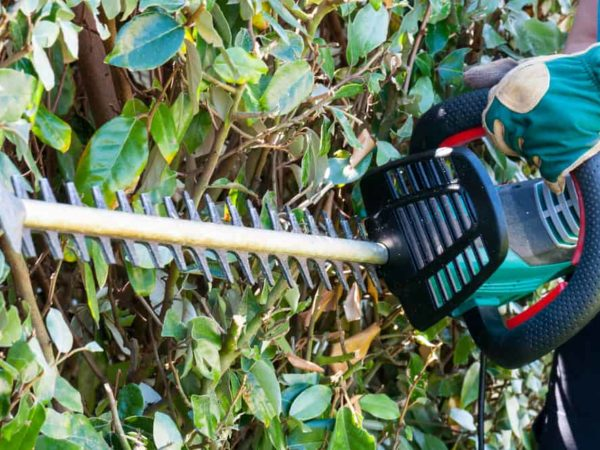 10 Best Cordless Hedge Trimmers of 2021 – Battery Powered Hedge Trimmer Reviews