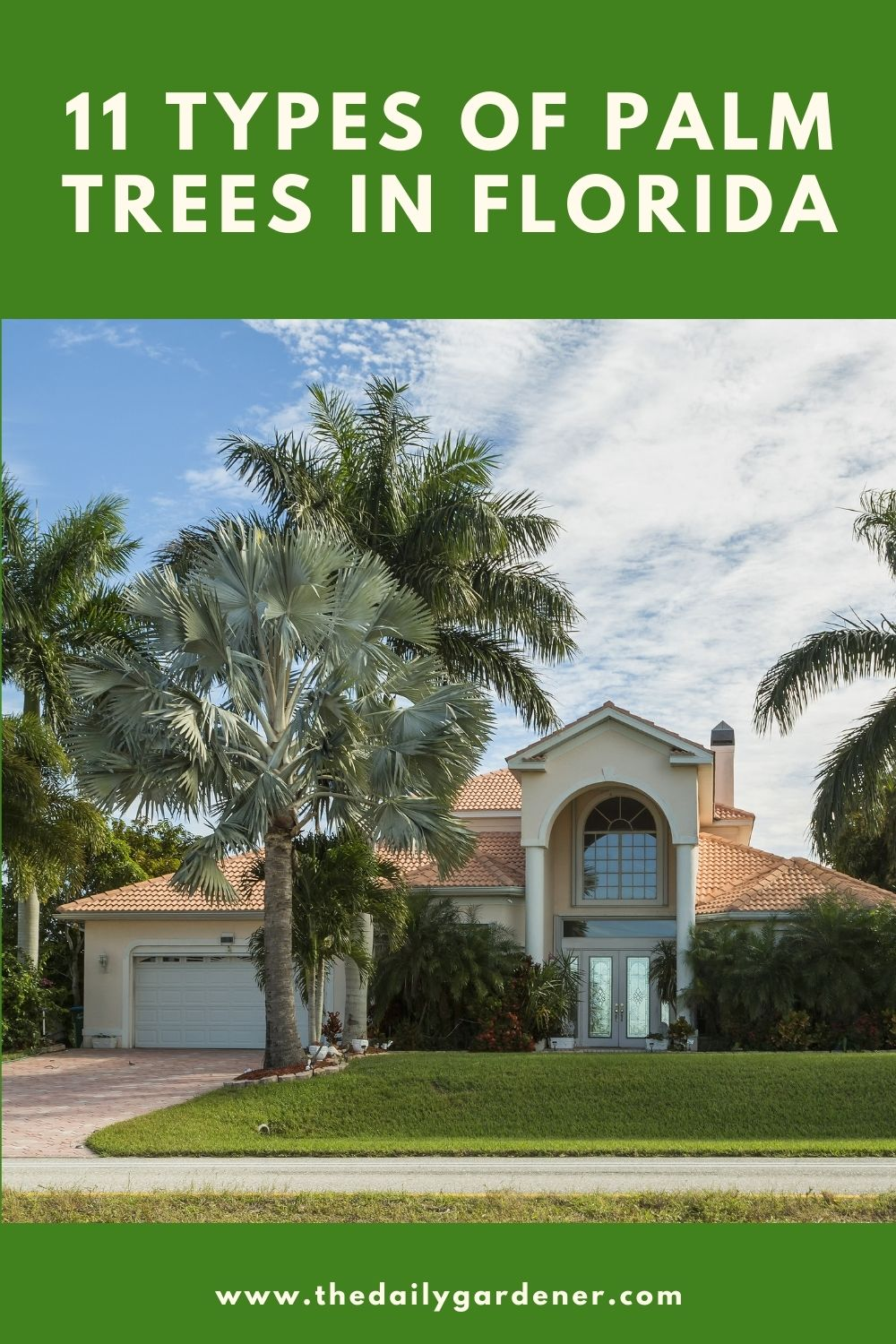 11 Types of Palm Trees in Florida 1