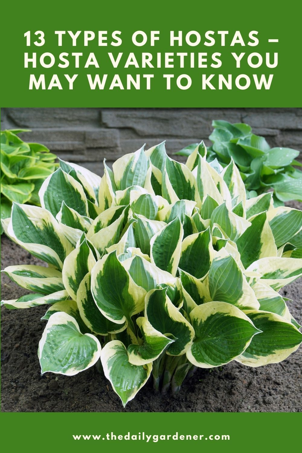 13 Types of Hostas - Hosta Varieties You May Want to Know