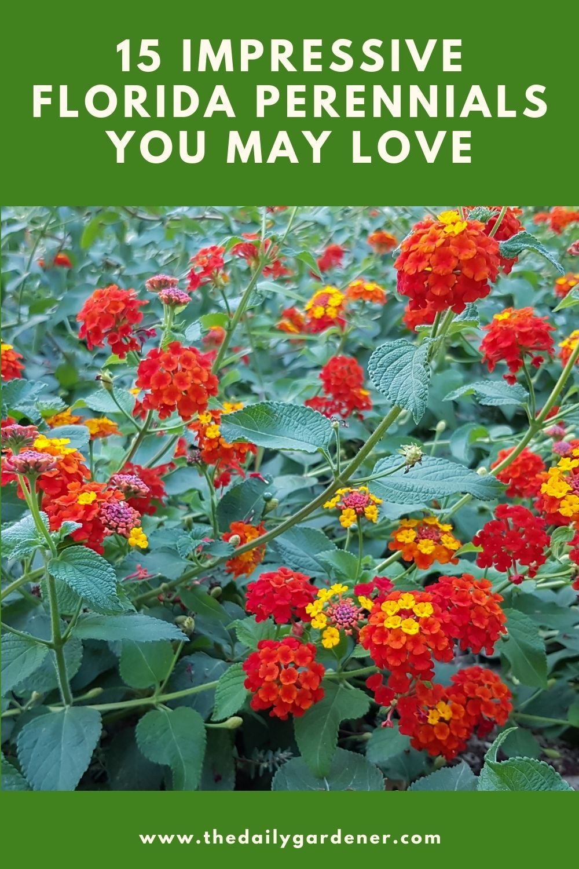 15 Impressive Florida Perennials You May Love 1