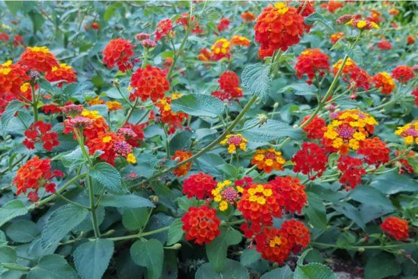 15 Impressive Florida Perennials You May Love