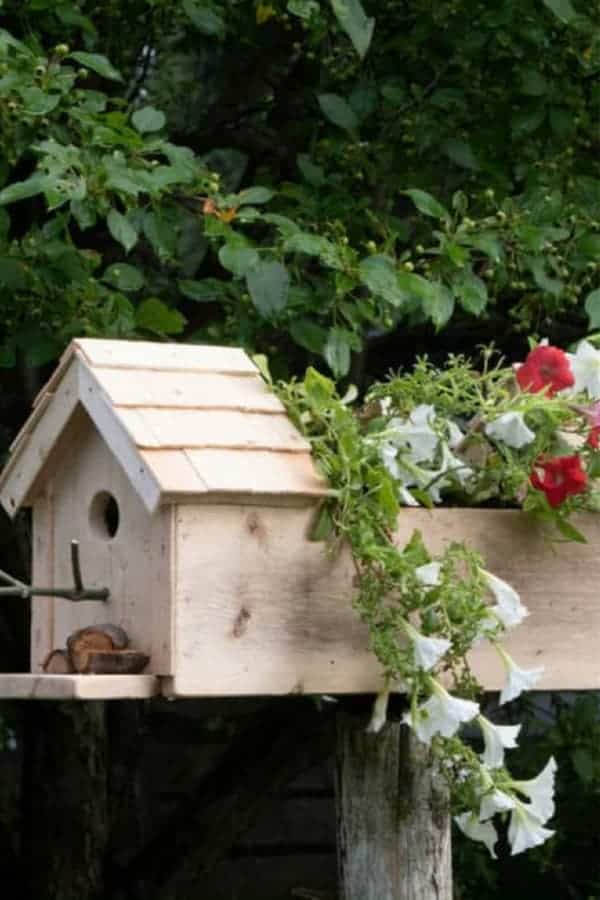 Bird Feeder Box