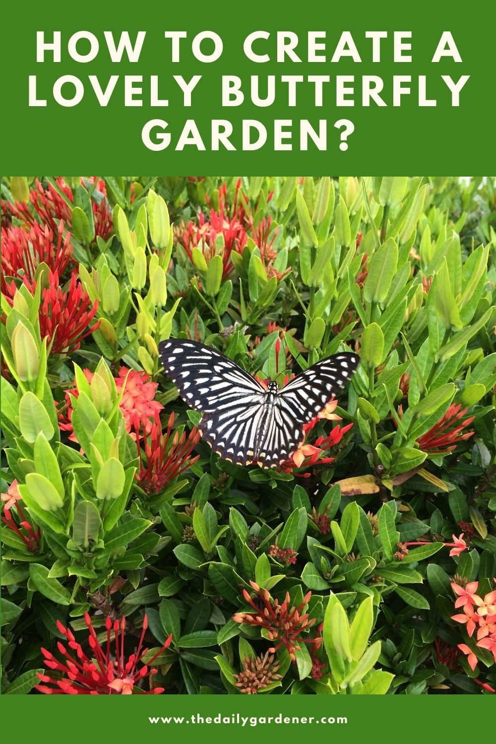 How to Create a Lovely Butterfly Garden 1