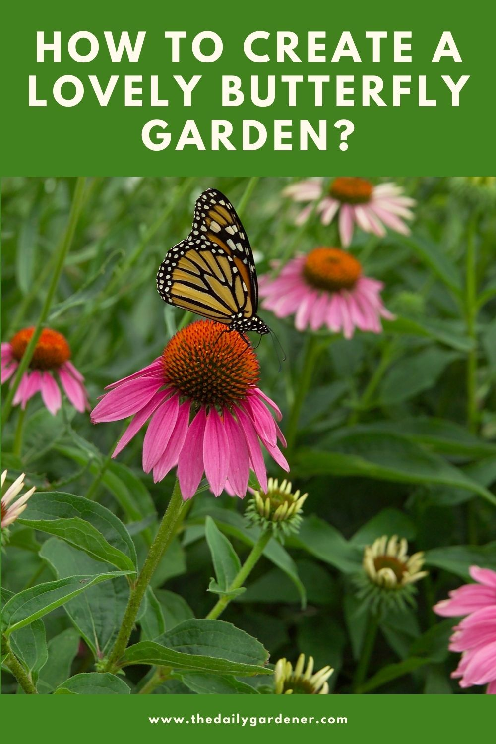 How to Create a Lovely Butterfly Garden 2