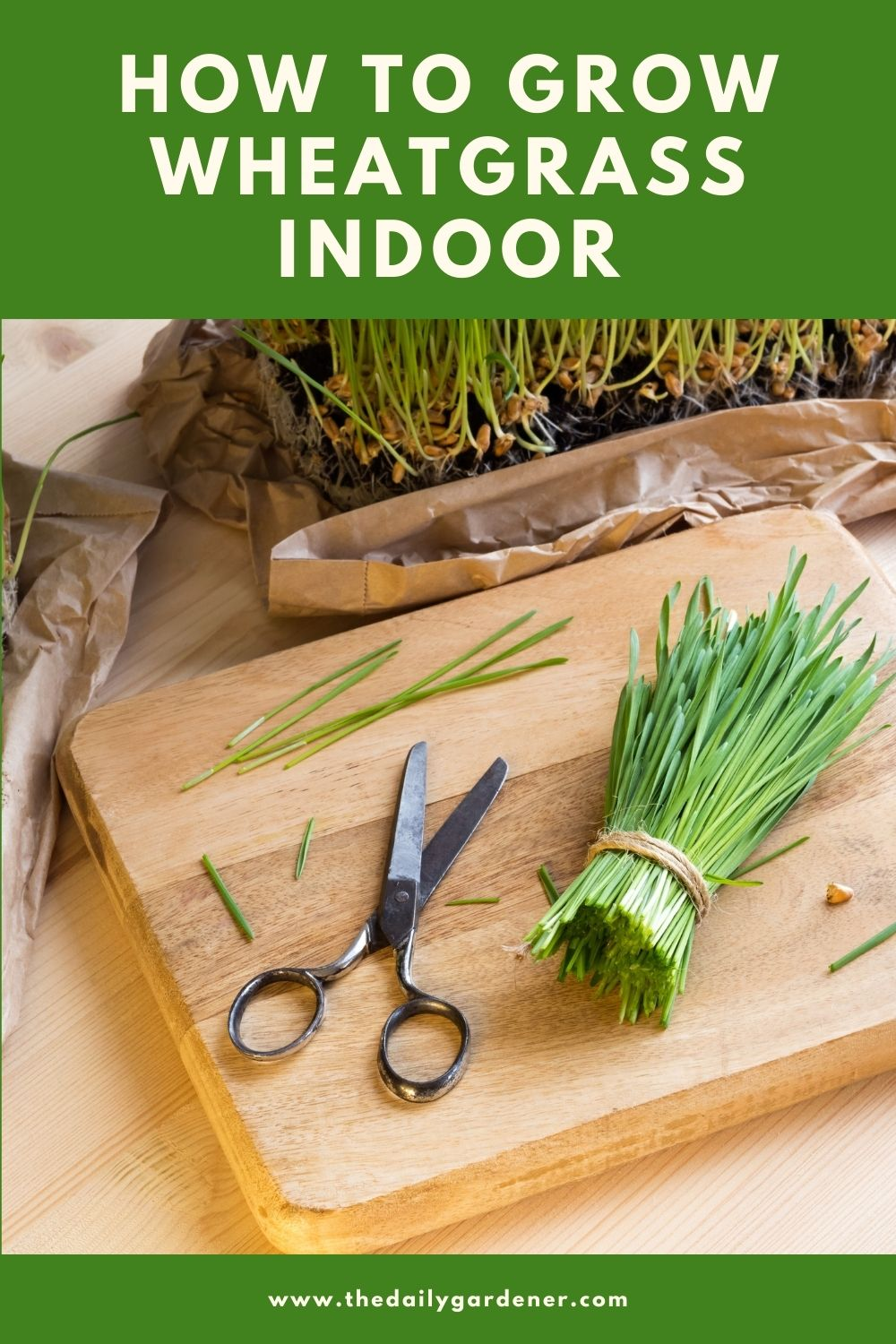 How to Grow Wheatgrass Indoor 2