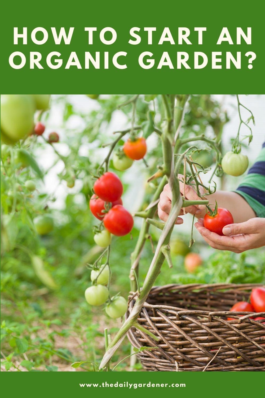 How to Start an Organic Garden 2