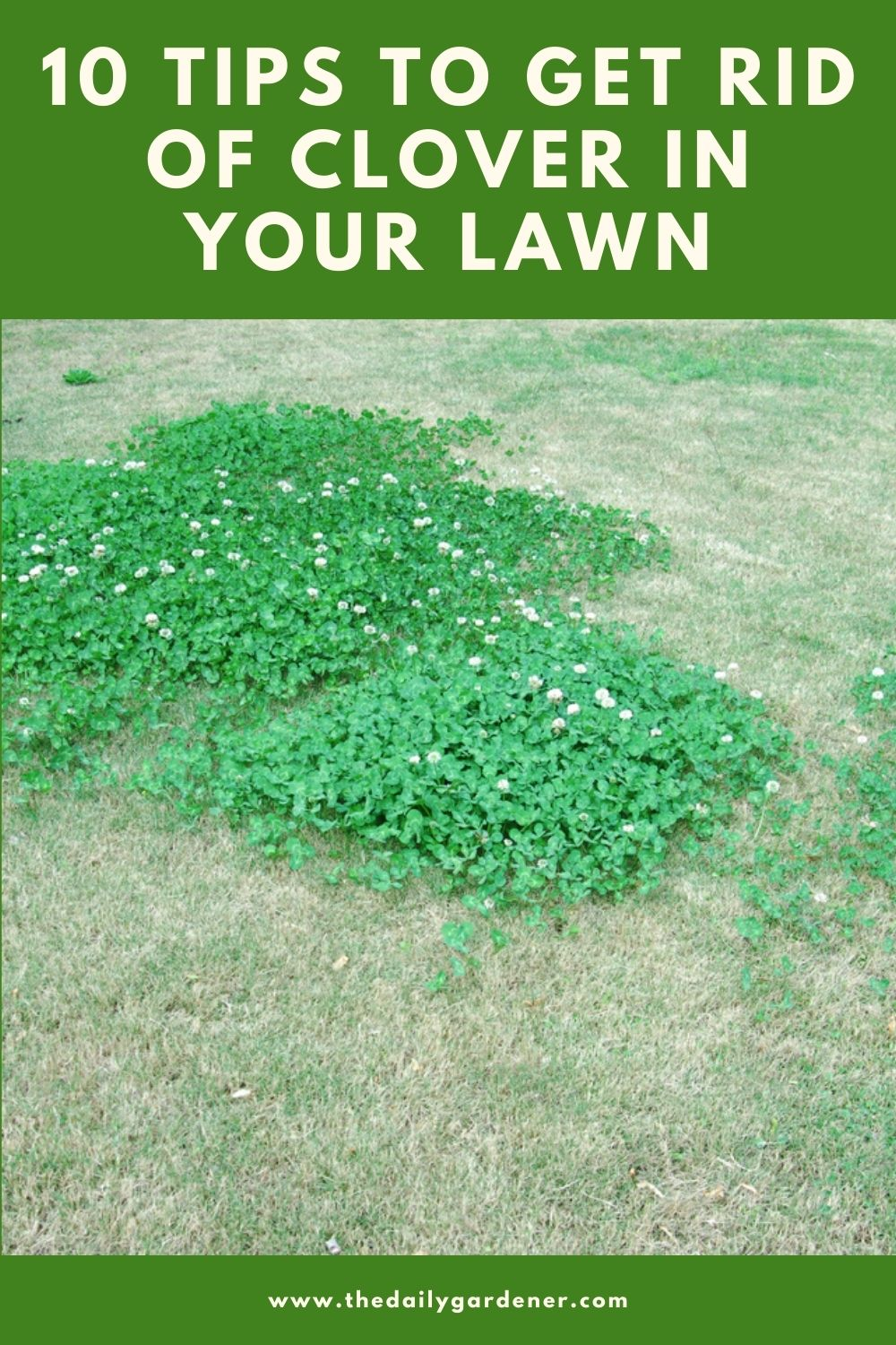 10 Tips to Get Rid of Clover in Your Lawn 2