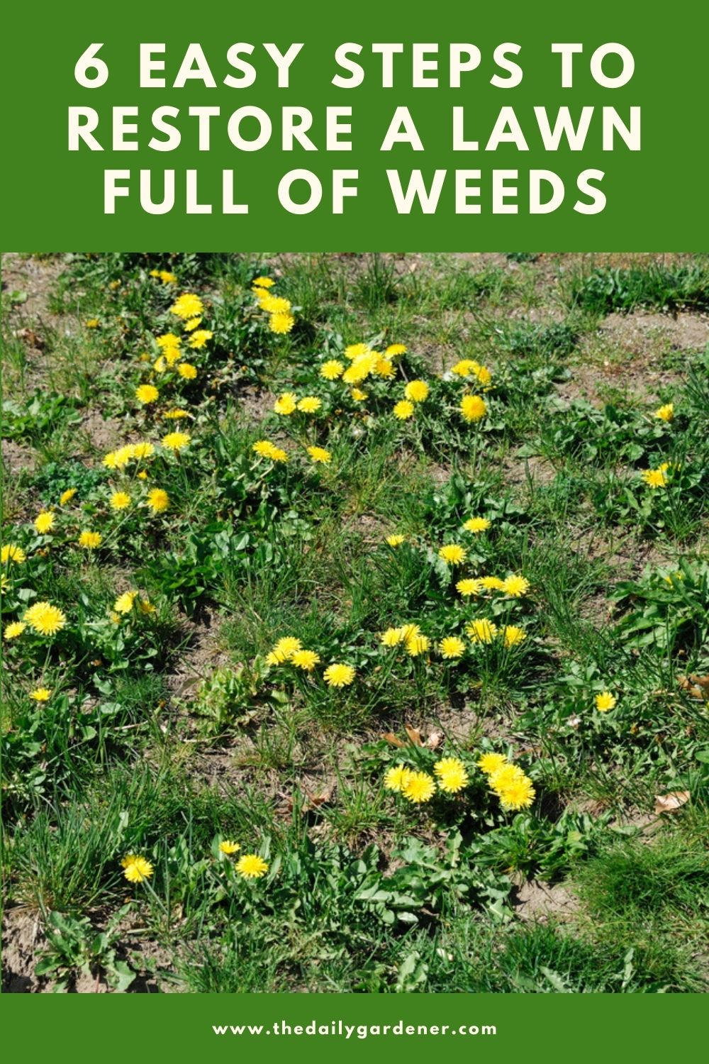 6 Easy Steps to Restore a Lawn Full of Weeds 1