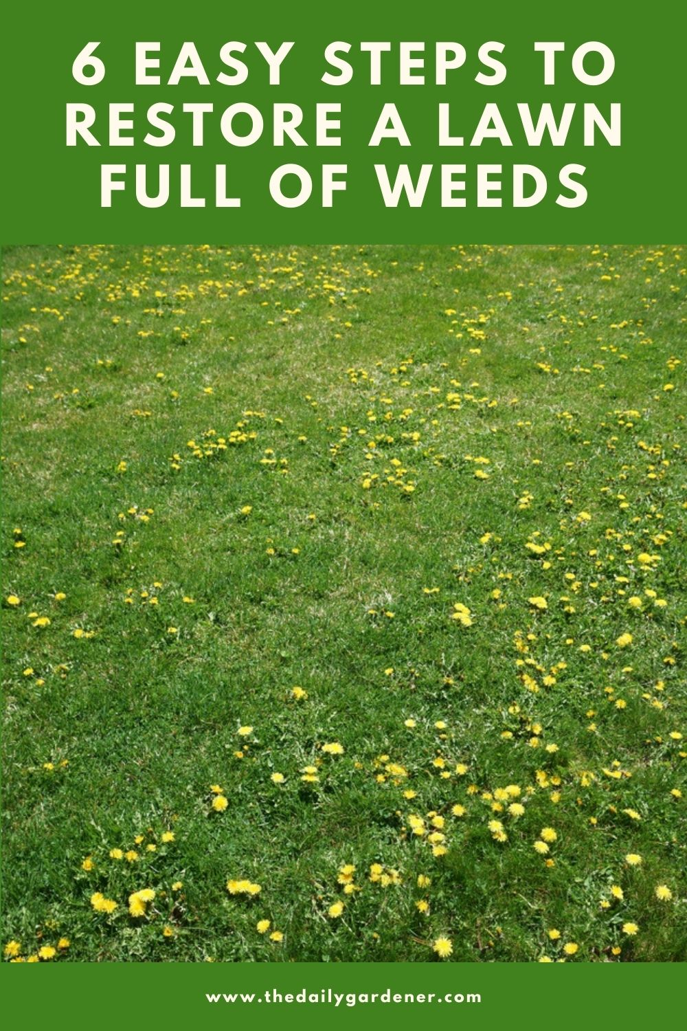 6 Easy Steps to Restore a Lawn Full of Weeds 2