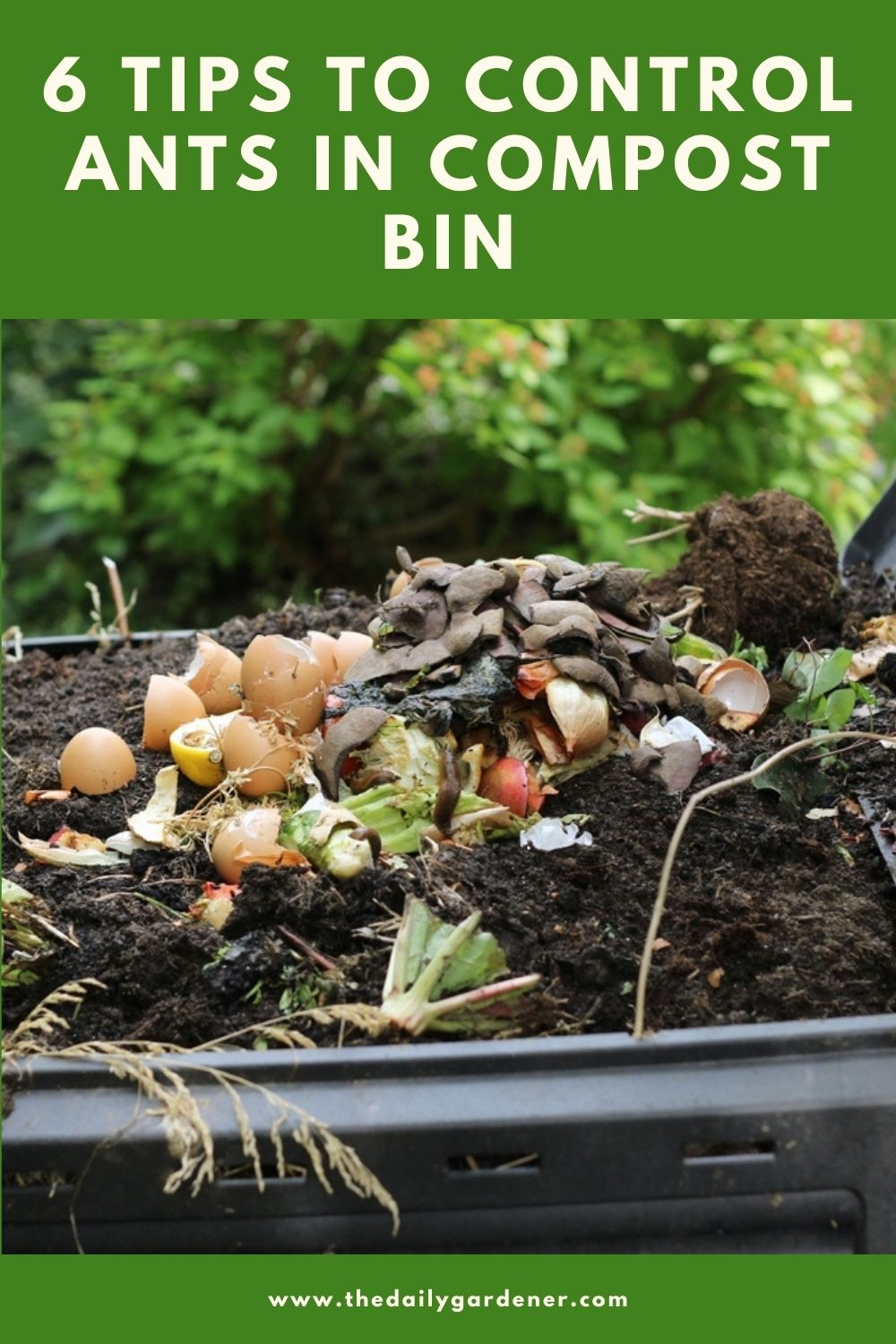 6 Tips to Control Ants in Compost Bin 1