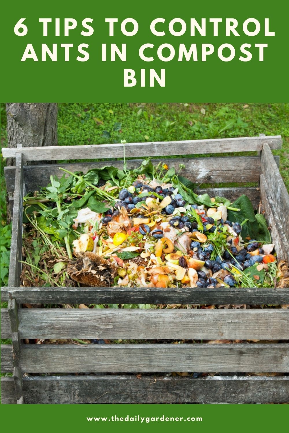 6 Tips to Control Ants in Compost Bin 2