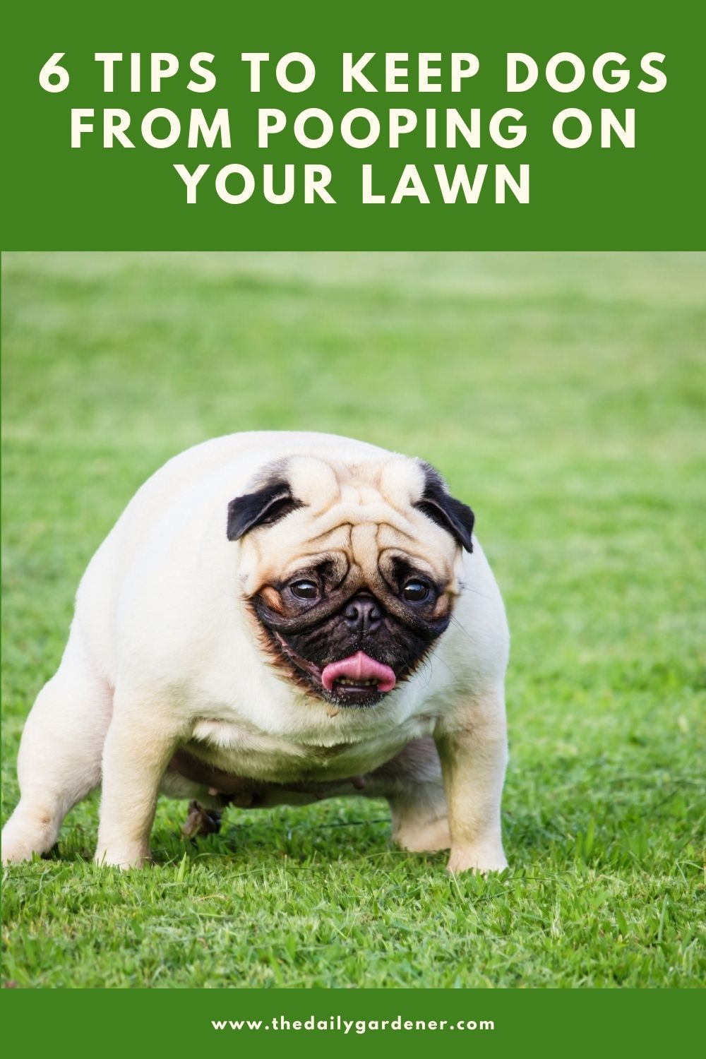 6 Tips to Keep Dogs from Pooping on Your Lawn 1