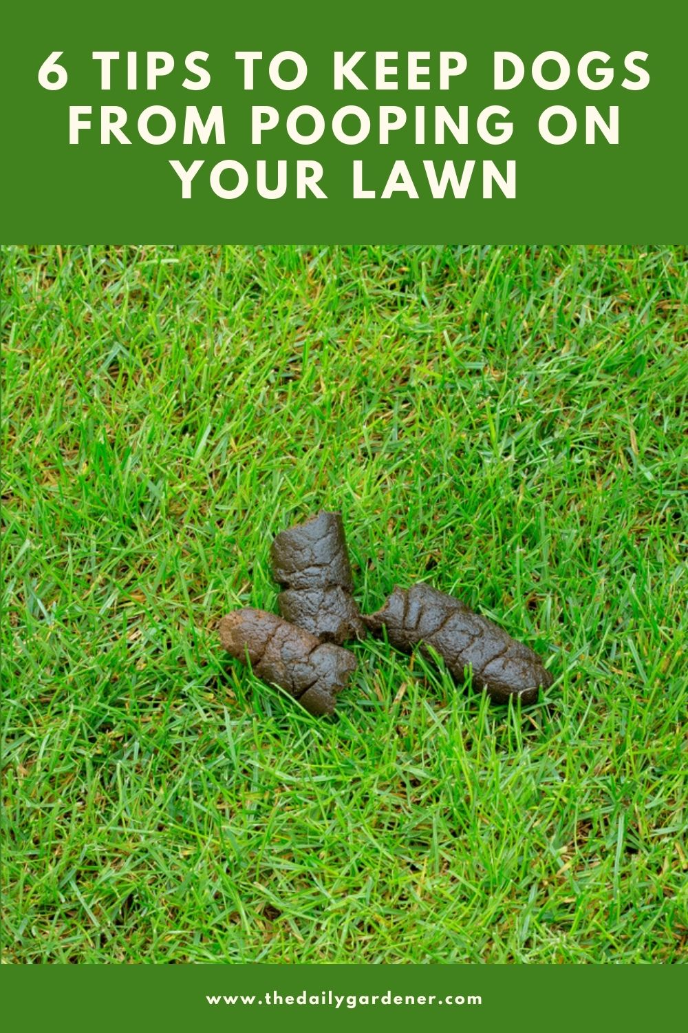 6 Tips to Keep Dogs from Pooping on Your Lawn 2