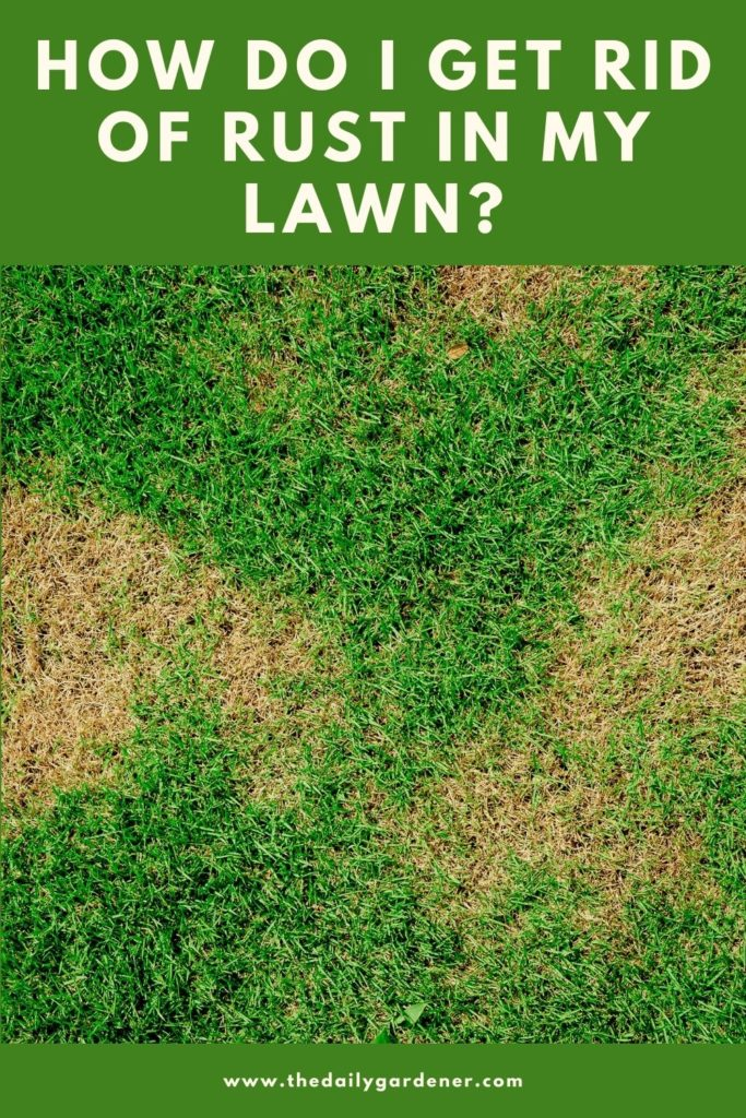 How Do I Get Rid of Rust in My Lawn 1