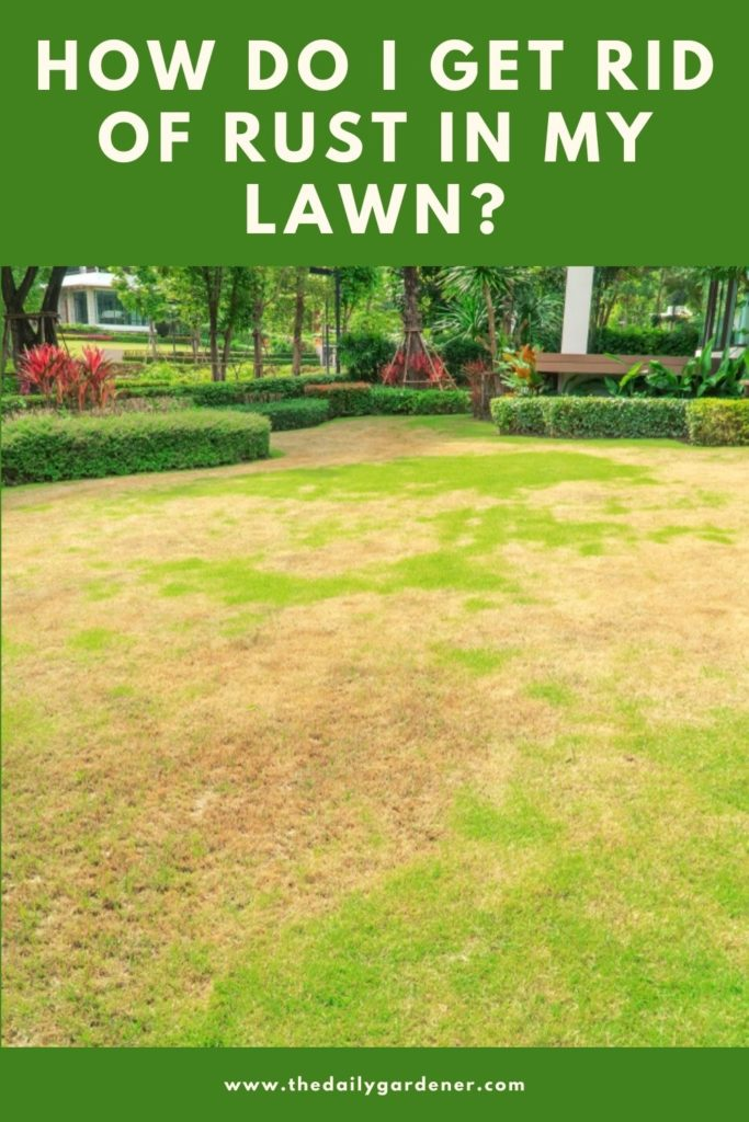 How Do I Get Rid of Rust in My Lawn 2
