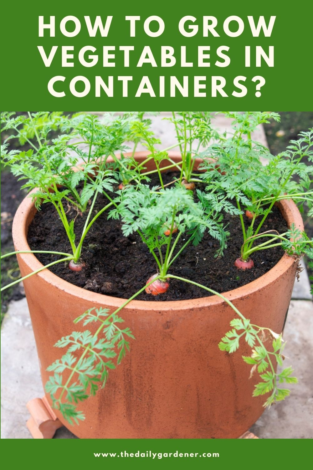 How to Grow Vegetables in Containers 1