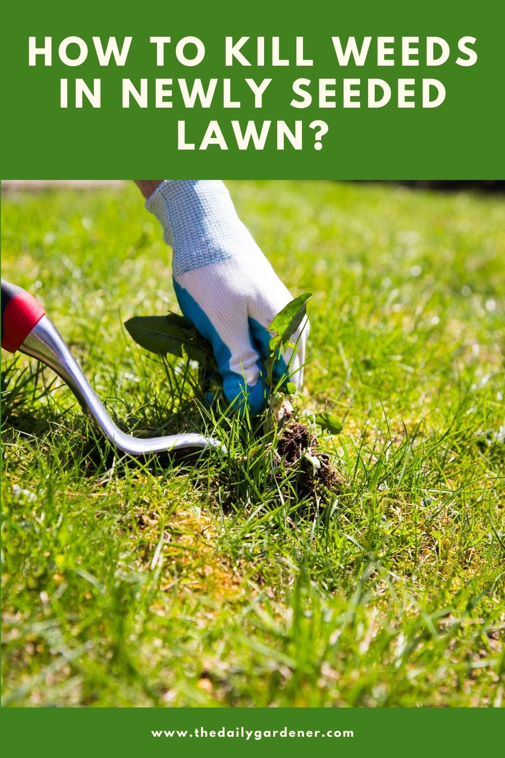 How to Kill Weeds in Newly Seeded Lawn 1