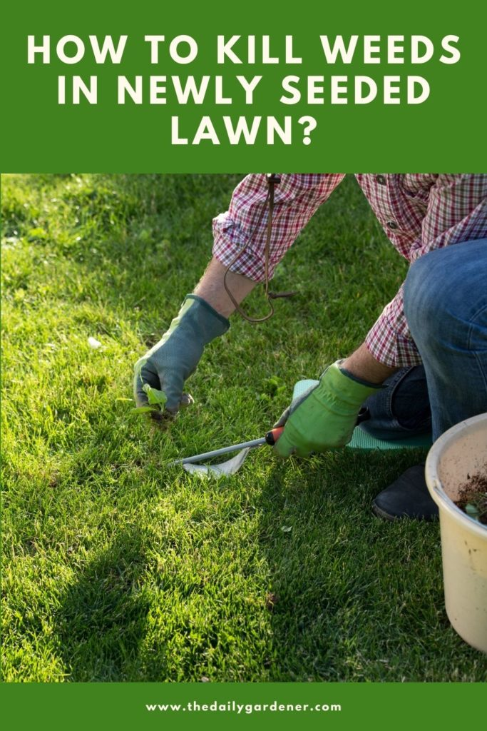 How to Kill Weeds in Newly Seeded Lawn 2