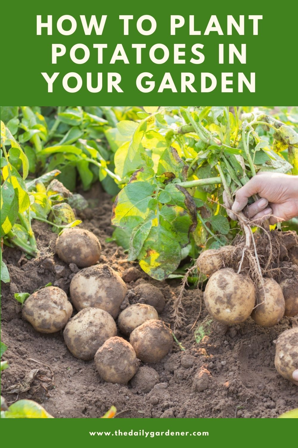 How to Plant Potatoes in Your Garden (Tricks to Care!) 1