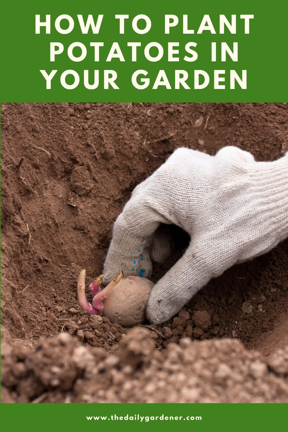 How to Plant Potatoes in Your Garden (Tricks to Care!) 2