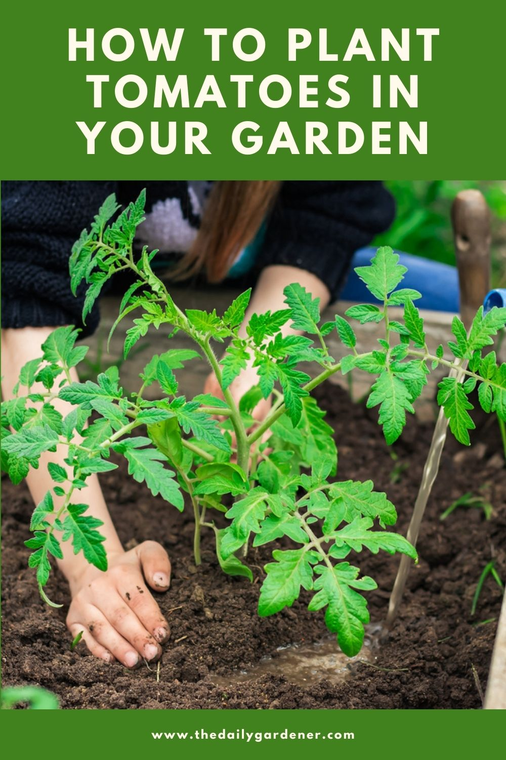 How to Plant Tomatoes in Your Garden (Tricks to Care!) 1