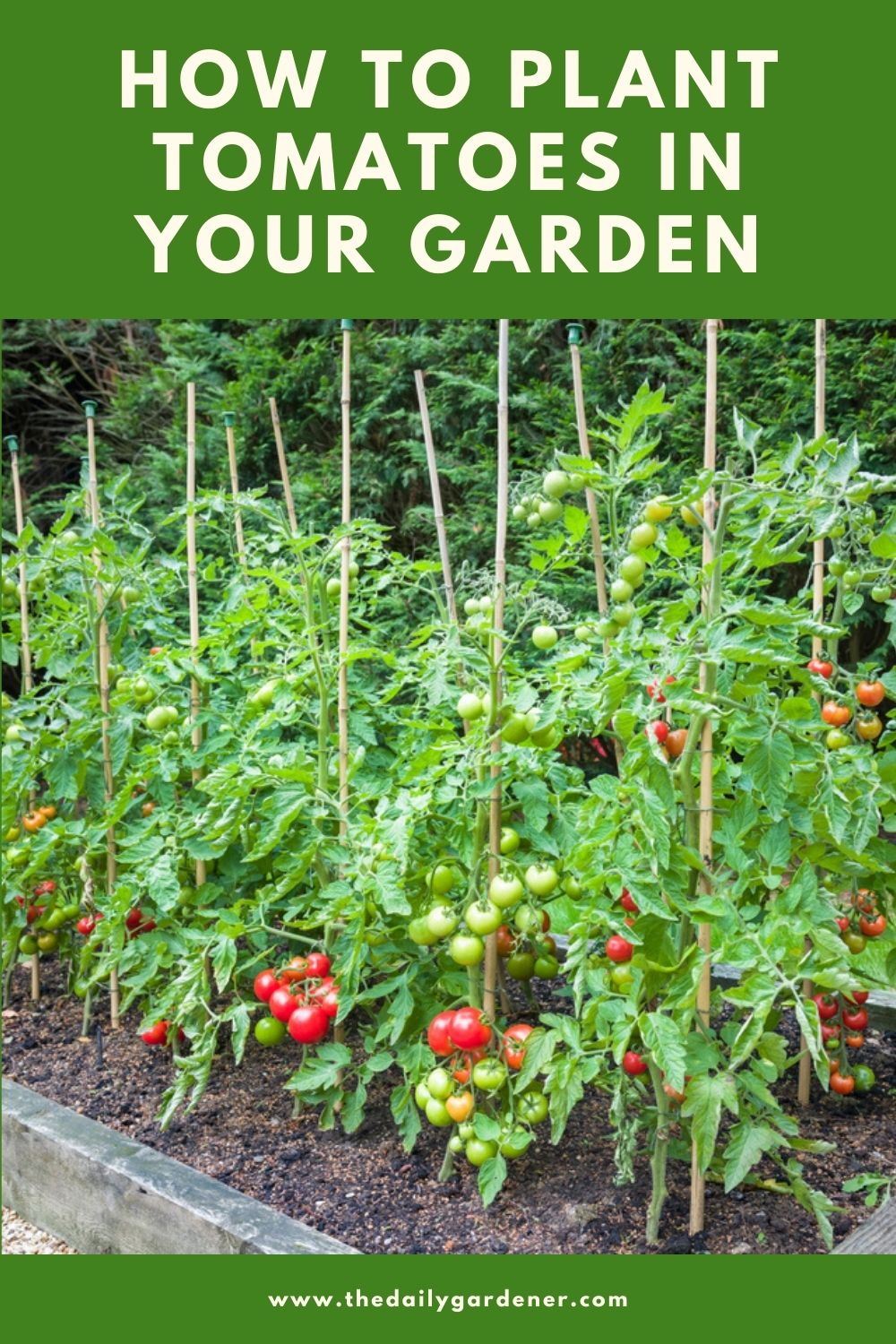 How to Plant Tomatoes in Your Garden (Tricks to Care!) 2