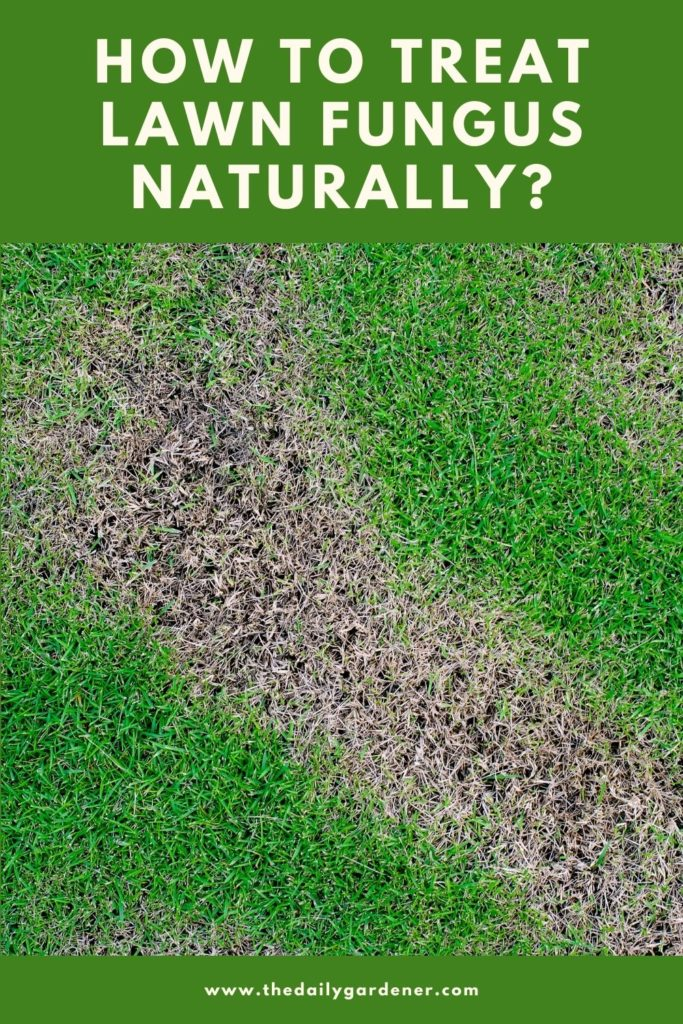 How to Treat Lawn Fungus Naturally 1