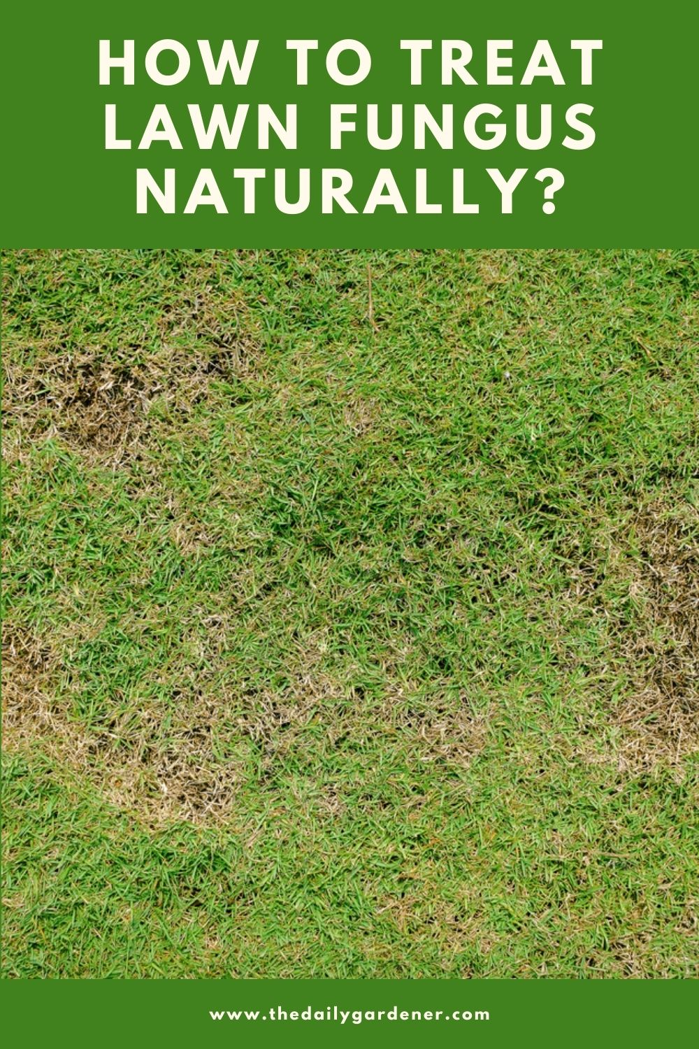 How to Treat Lawn Fungus Naturally 2