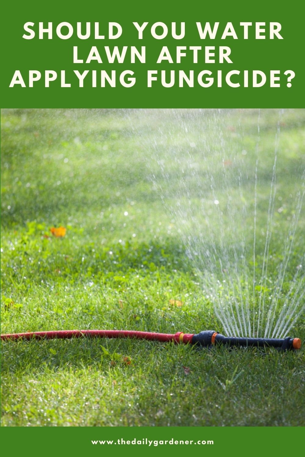 Should You Water Lawn After Applying Fungicide 1
