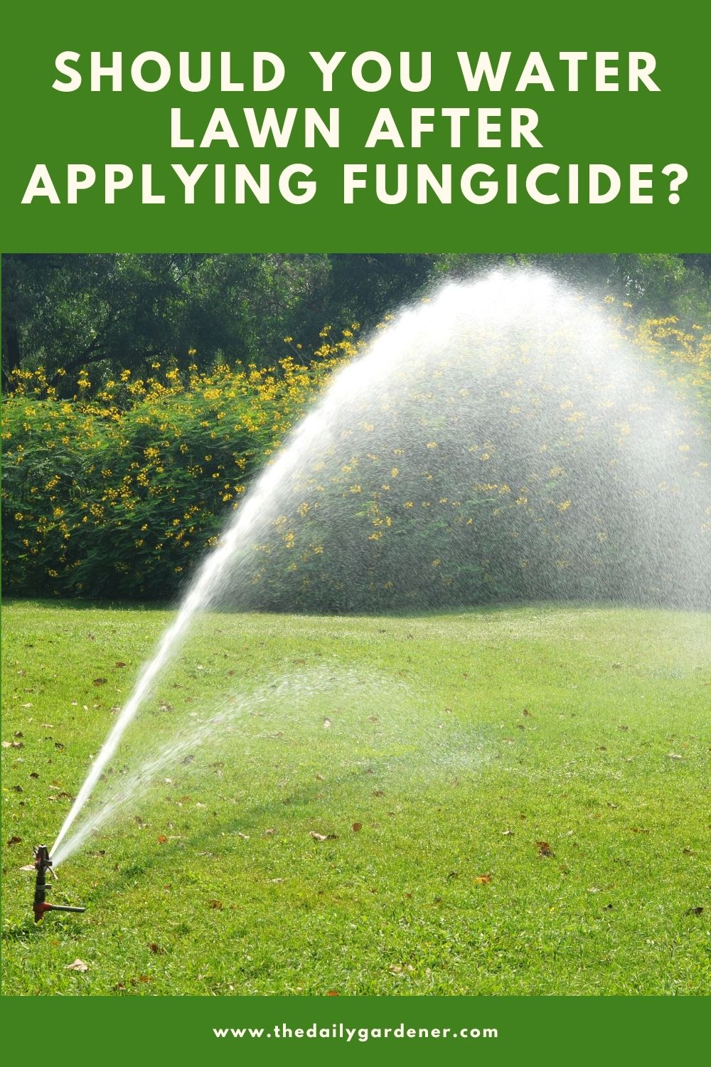 Should You Water Lawn After Applying Fungicide 2