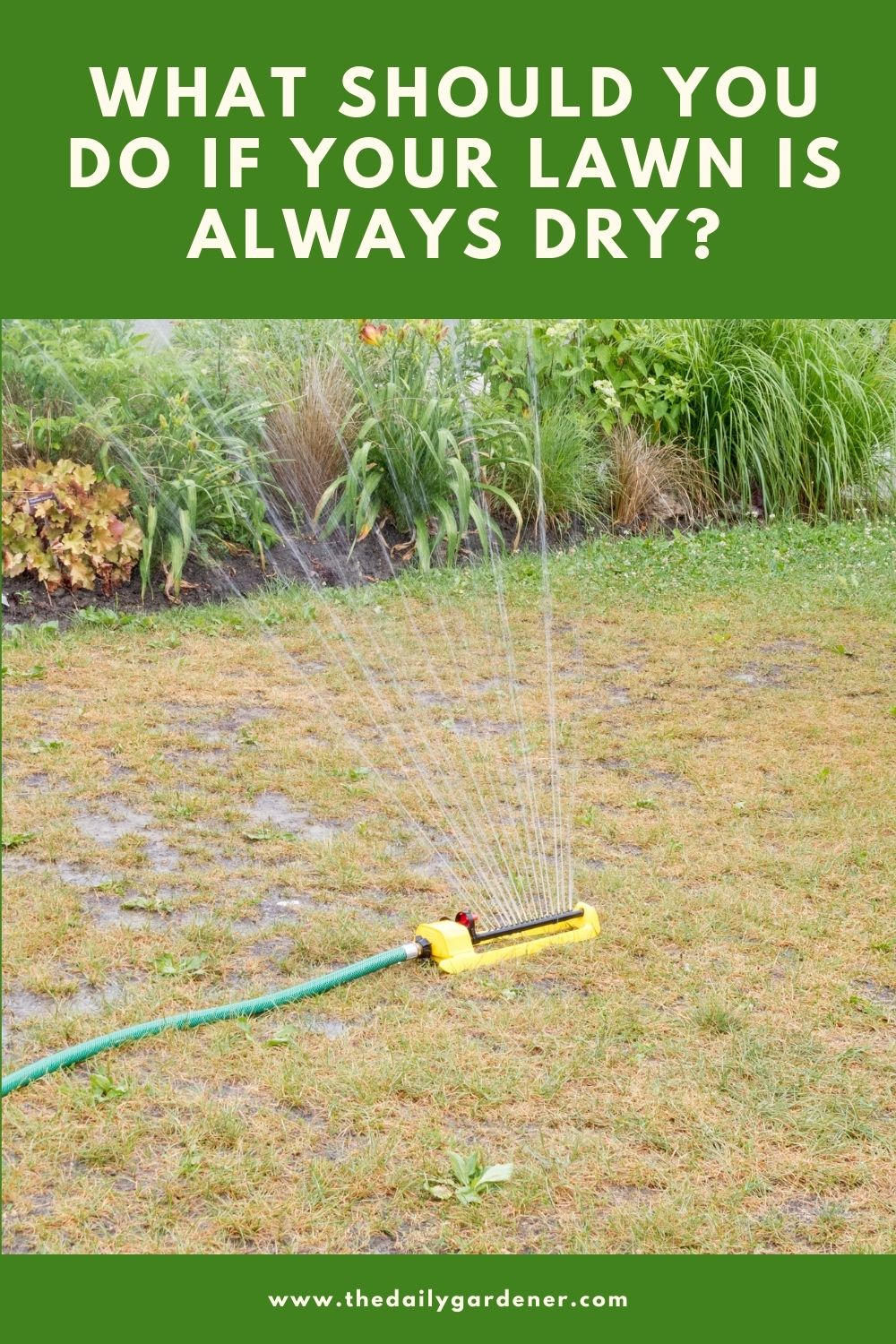 What Should You Do If Your Lawn Is Always Dry 1