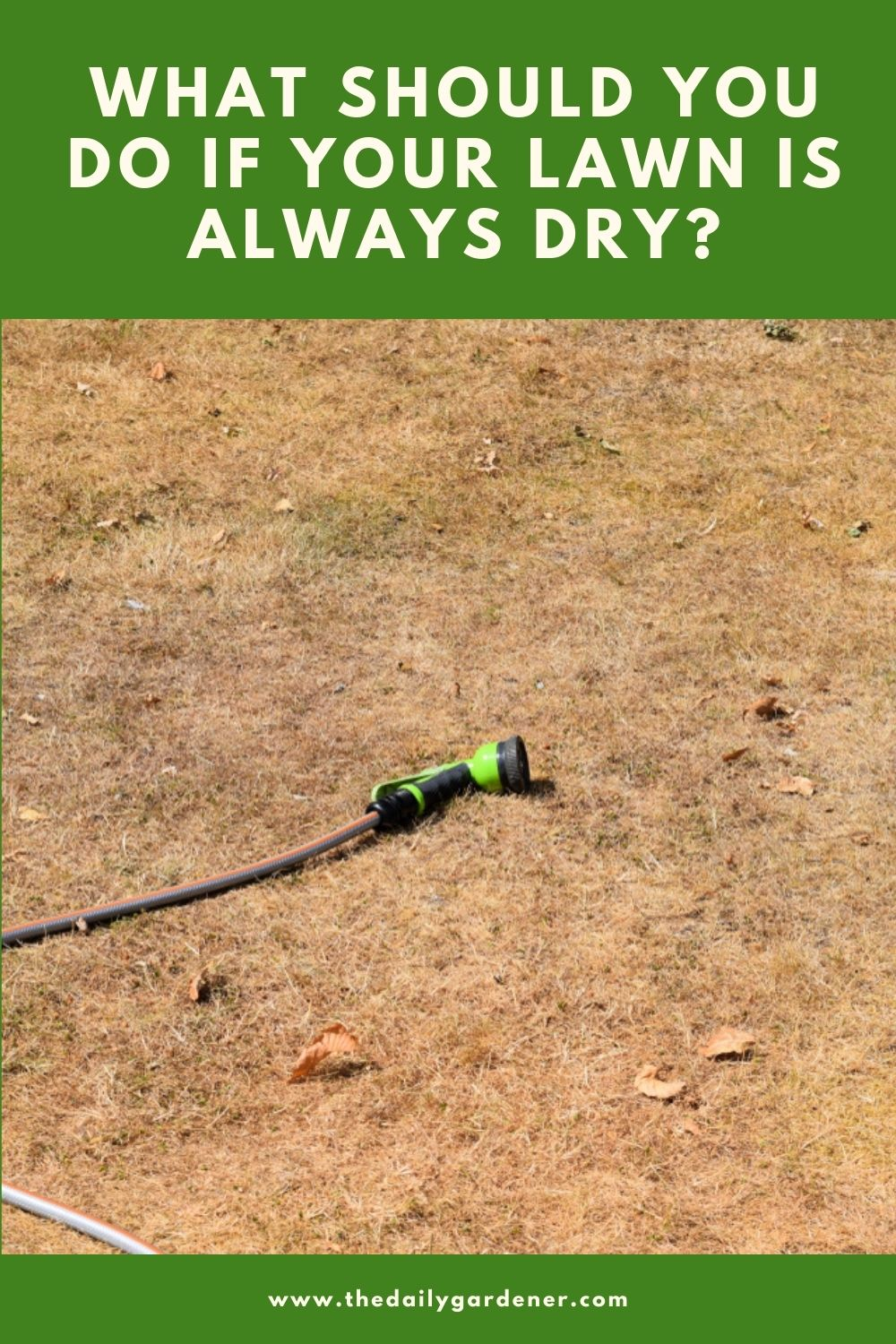 What Should You Do If Your Lawn Is Always Dry 2