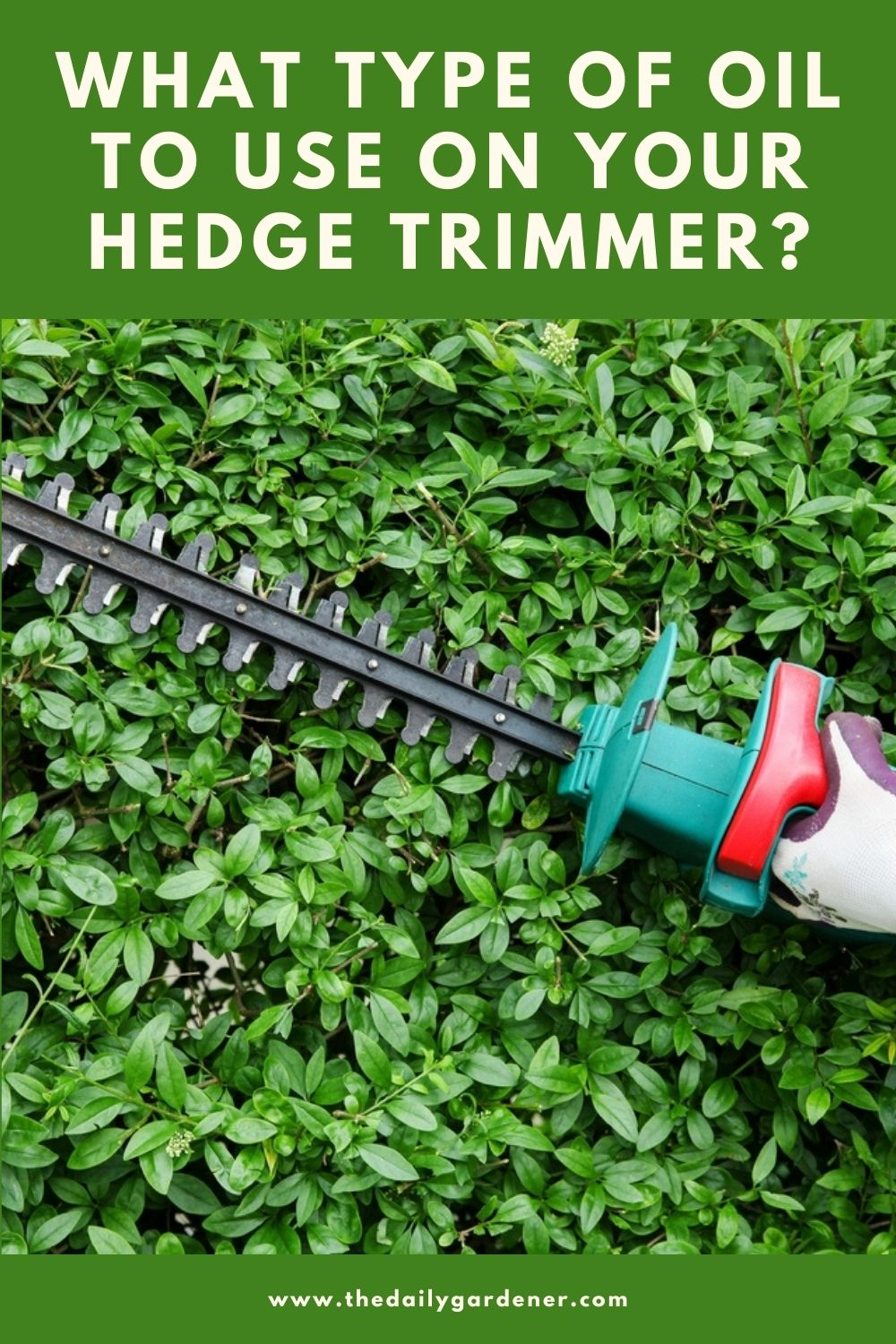 What Type of Oil to Use on Your Hedge Trimmer 1