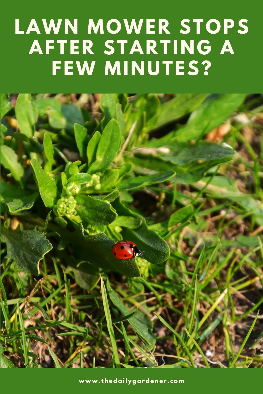 What are the flying bugs in my lawn (11 Tips for Killing) 1