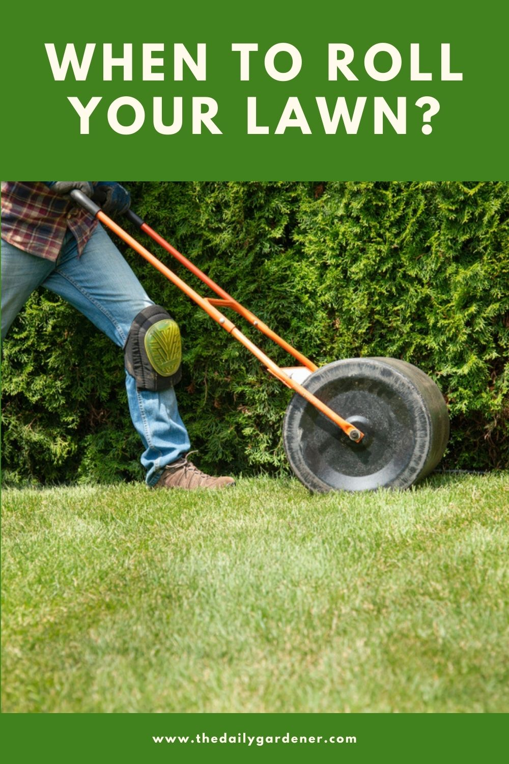 When to Roll Your Lawn 1