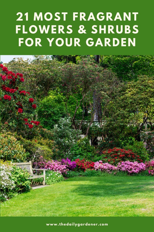 21 Most Fragrant Flowers & Shrubs for Your Garden 1