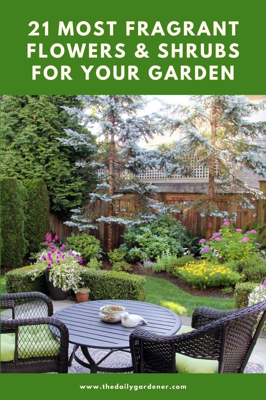 21 Most Fragrant Flowers & Shrubs for Your Garden 2