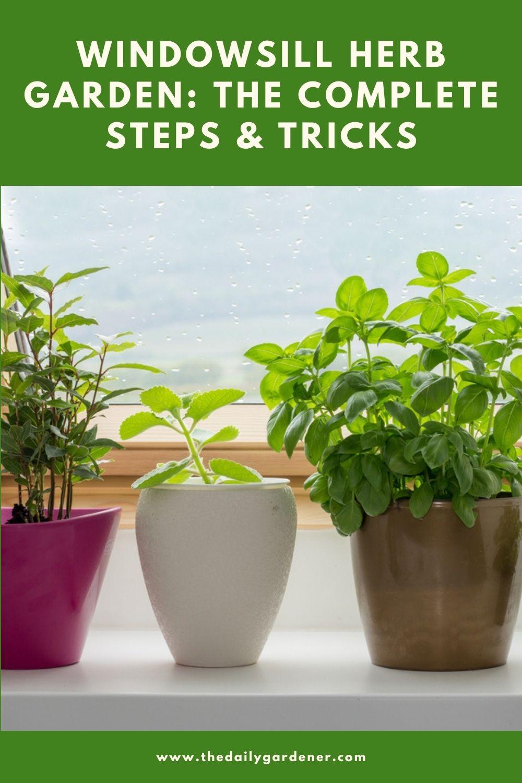 Windowsill Herb Garden The Complete Steps & Tricks 1